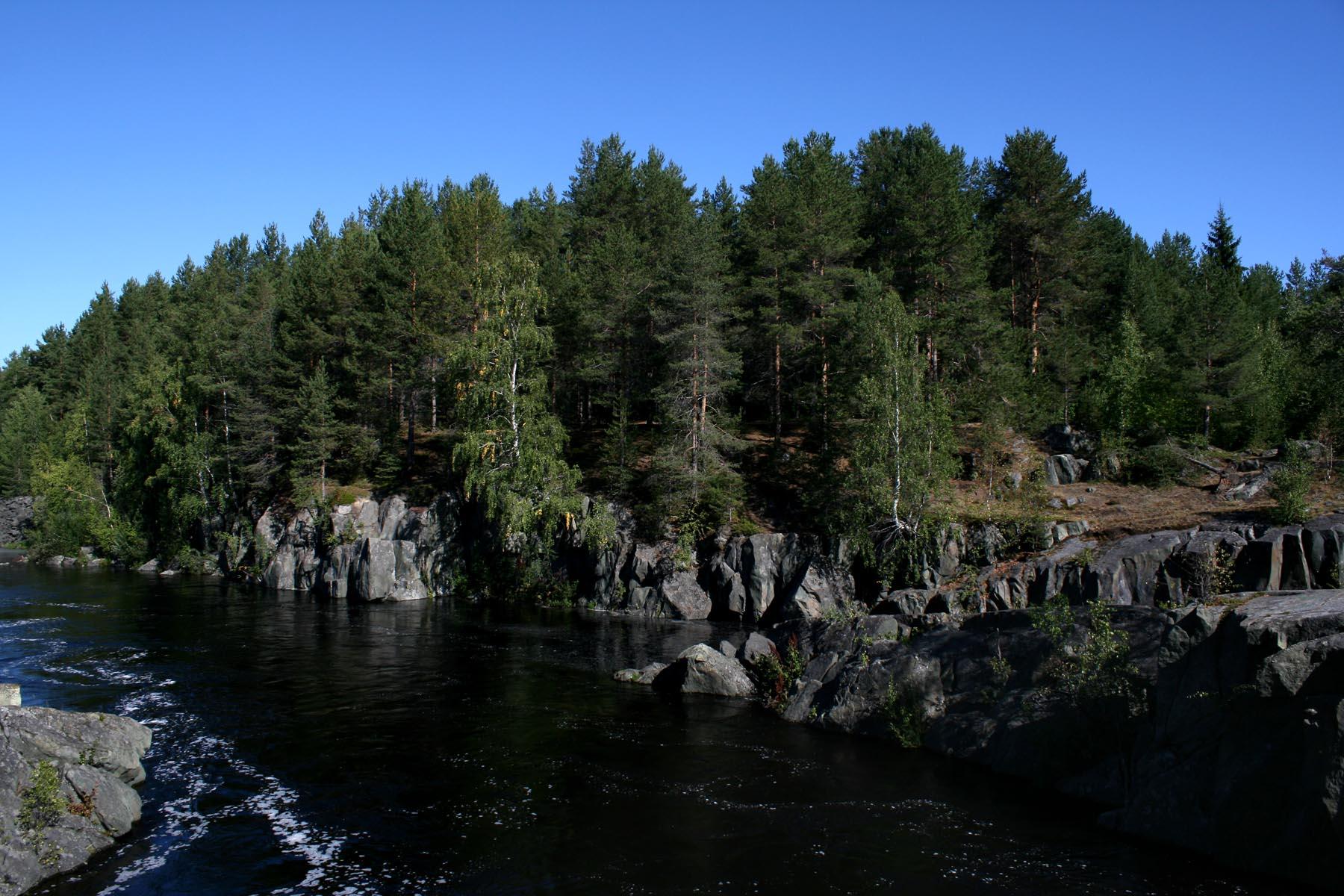 Лес на камне