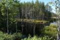Живописное болотце
