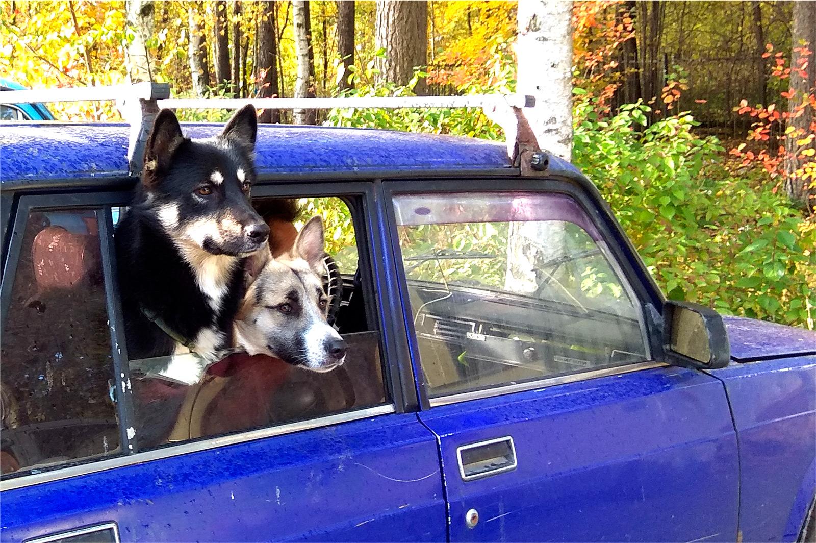 Пацаны любят кататься на машине