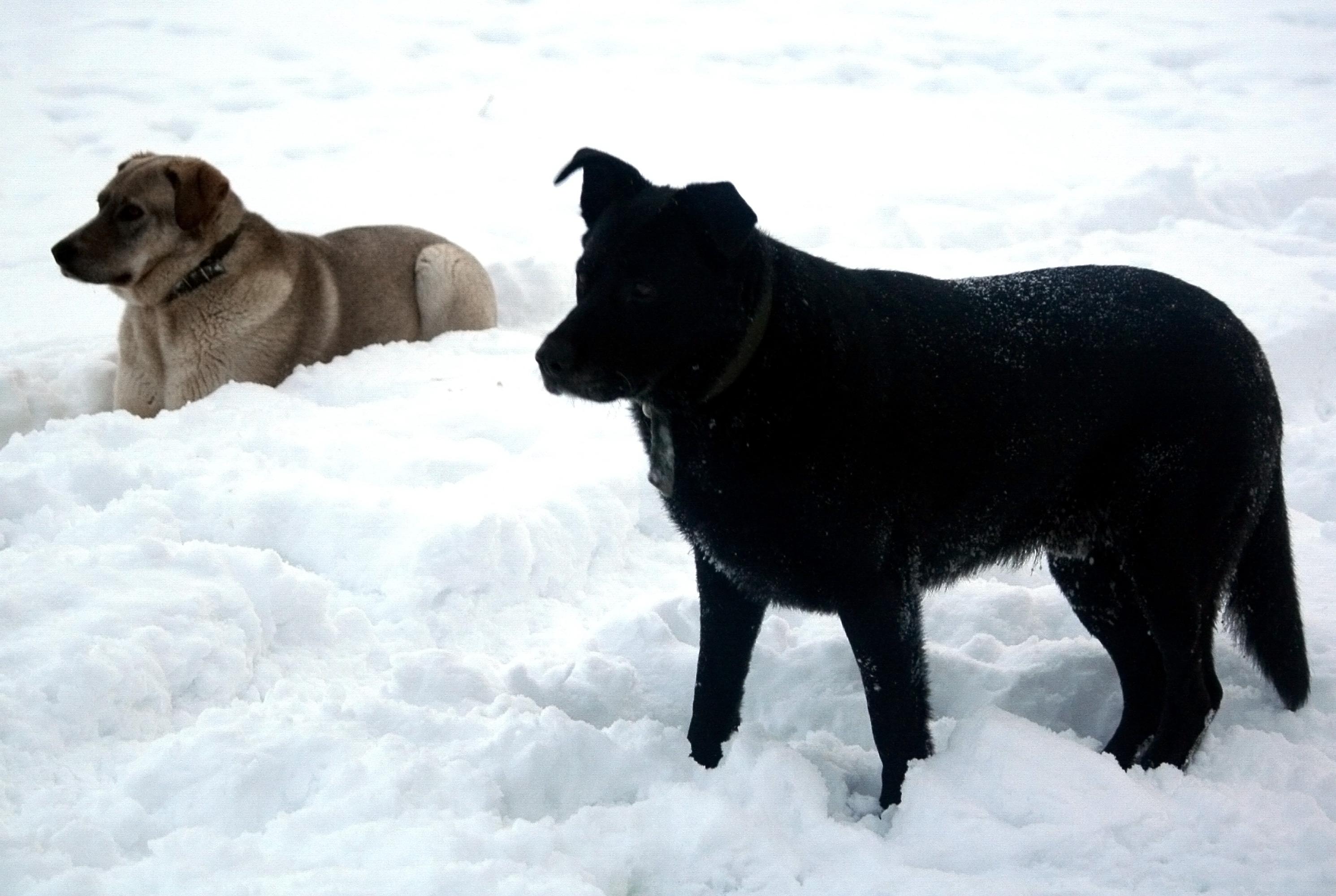 Две хорошие собаки