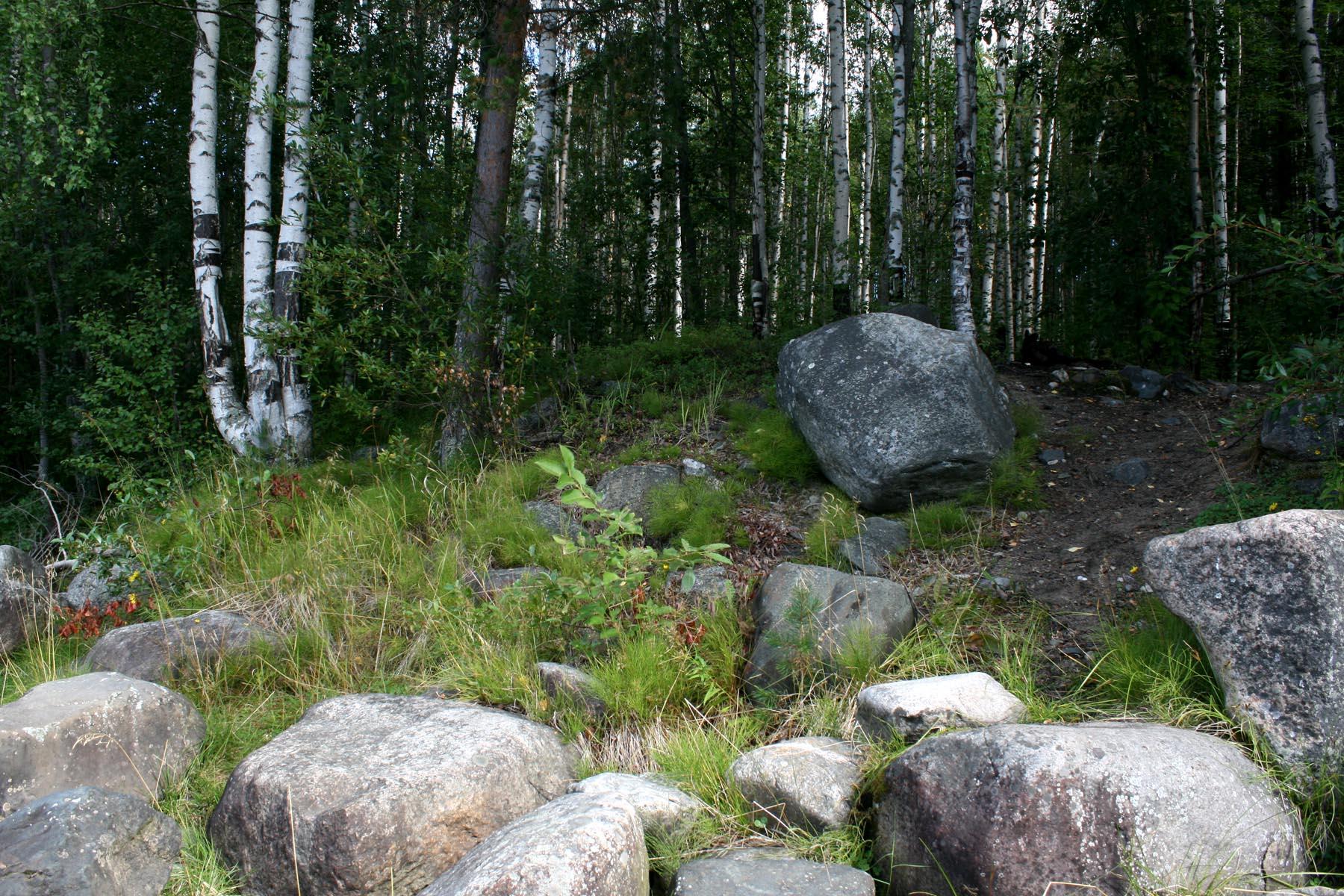 Камни и березы