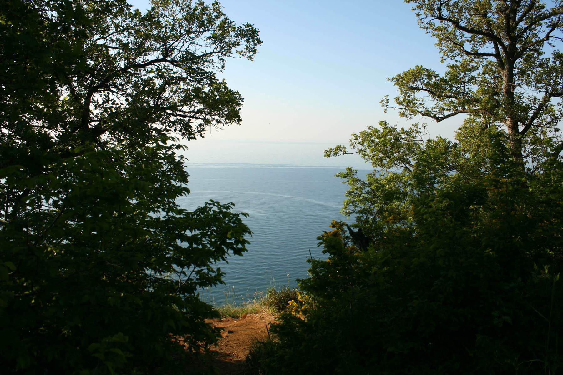 Море сквозь деревья