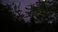 Сиреневое небо