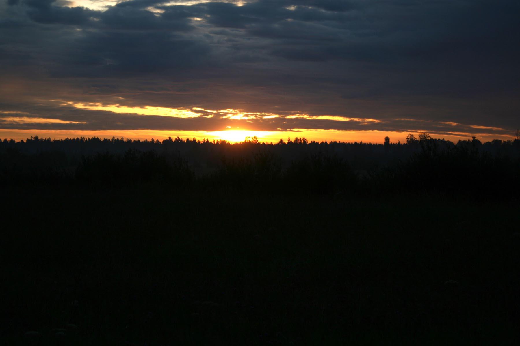 Солнце над лесом