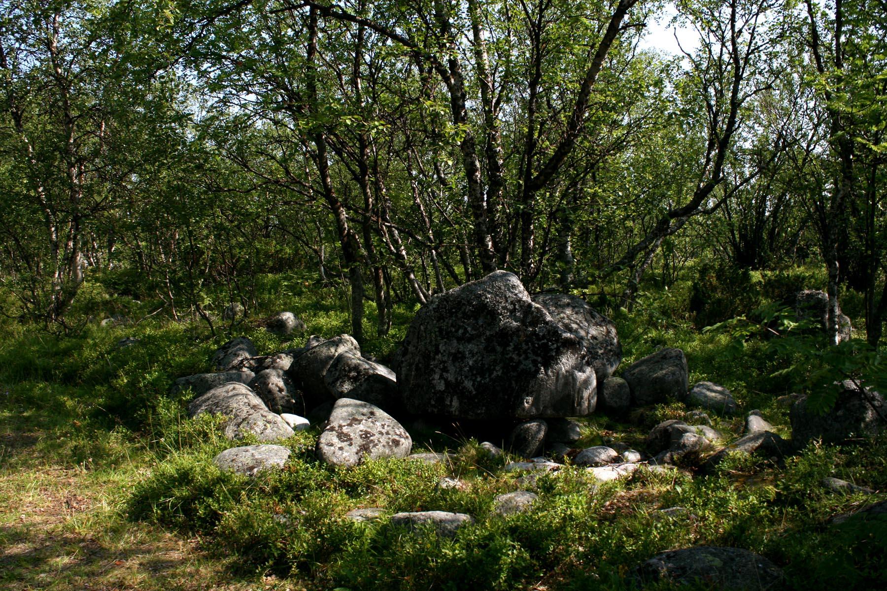 Березы и камни Муксалмы