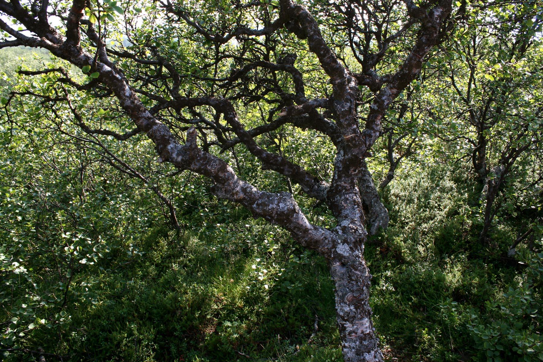 Лес Заяцкого острова
