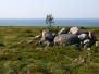 Природа Соловецких островов