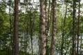 Озеро сквозь лес