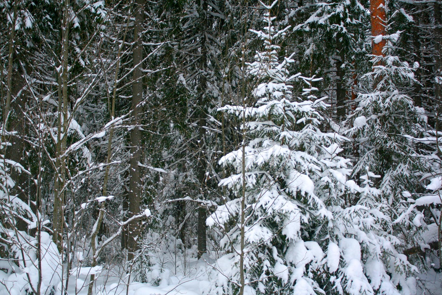 Снова лес