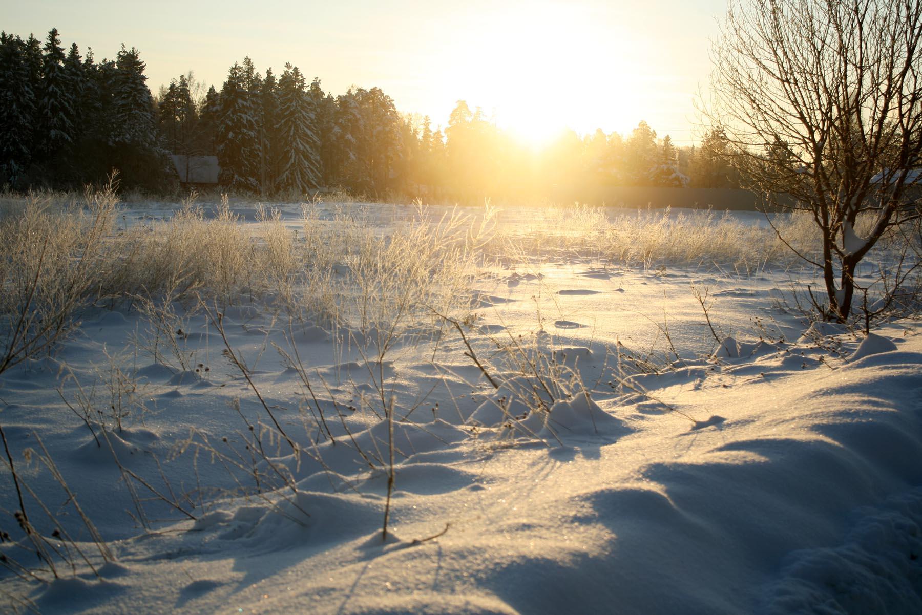 Солнце уходит за лес