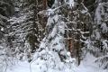 Настоящий лес