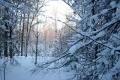 Свет сквозь снег