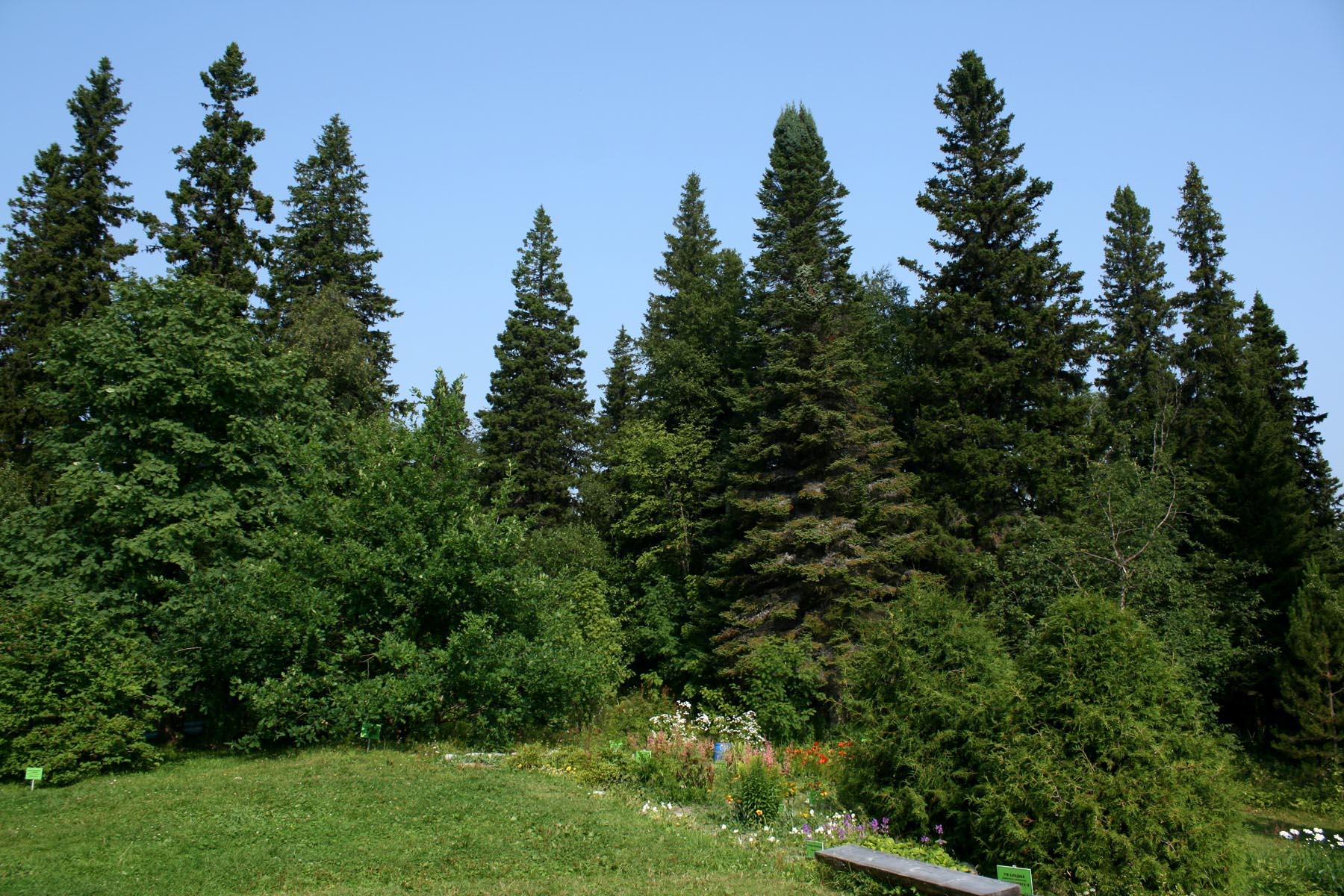 Лес вокруг сада