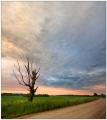 Дерево и закат