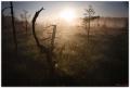 Рассвет на болоте