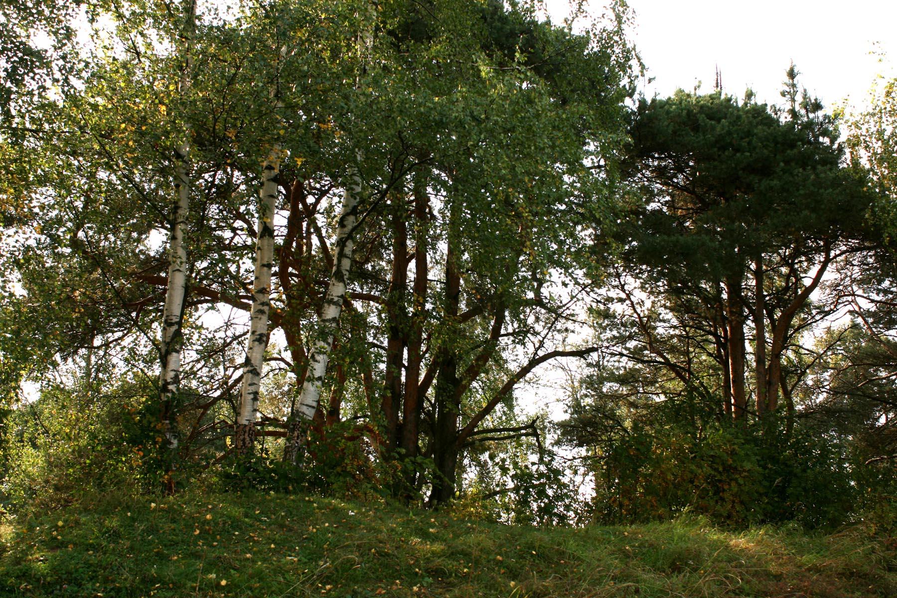 Деревья на валу