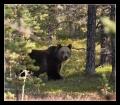 Другой медведь