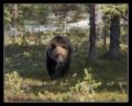 Еще медведь