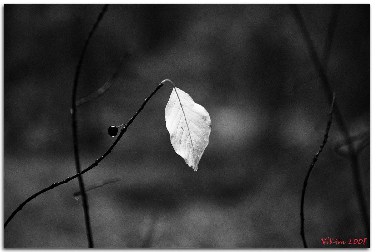 Серебряный лист