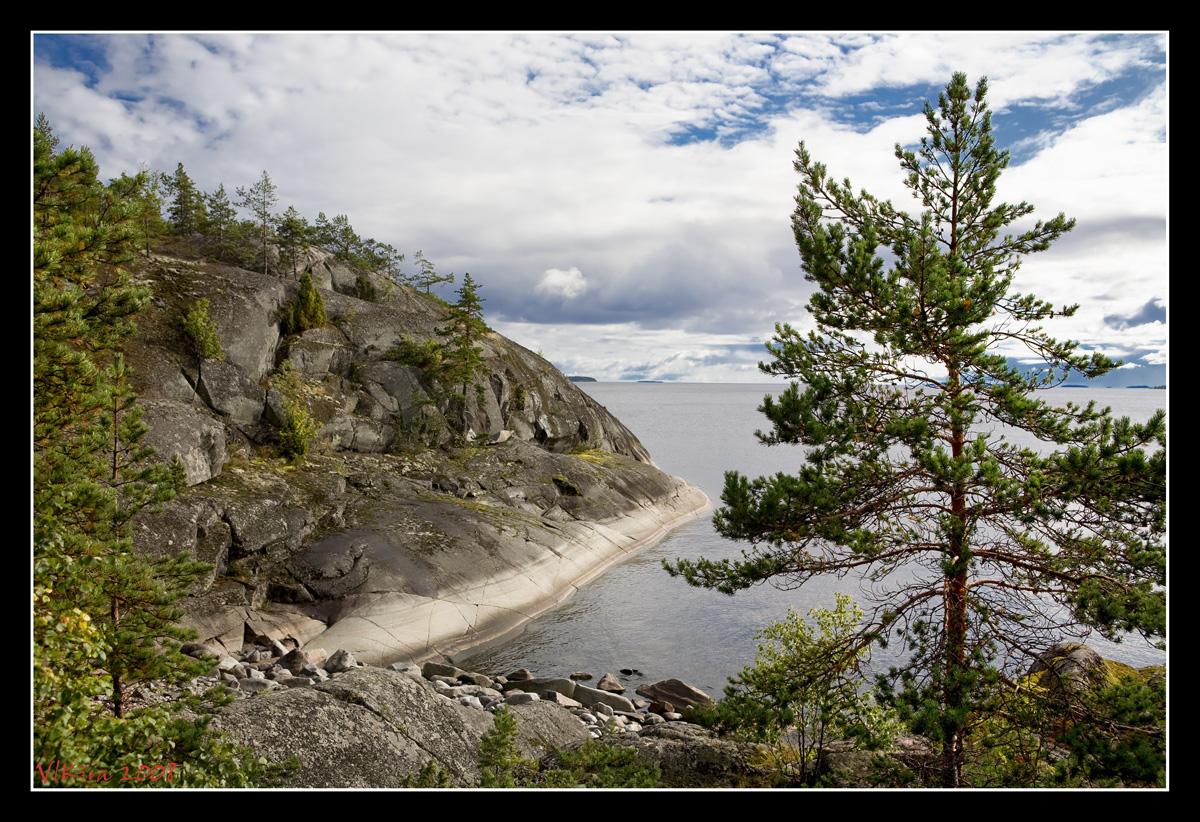 Сосна над каменным берегом