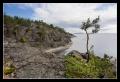 Сосенка над каменным берегом
