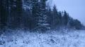 Просека зимой