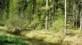 Лес отражается в ручье