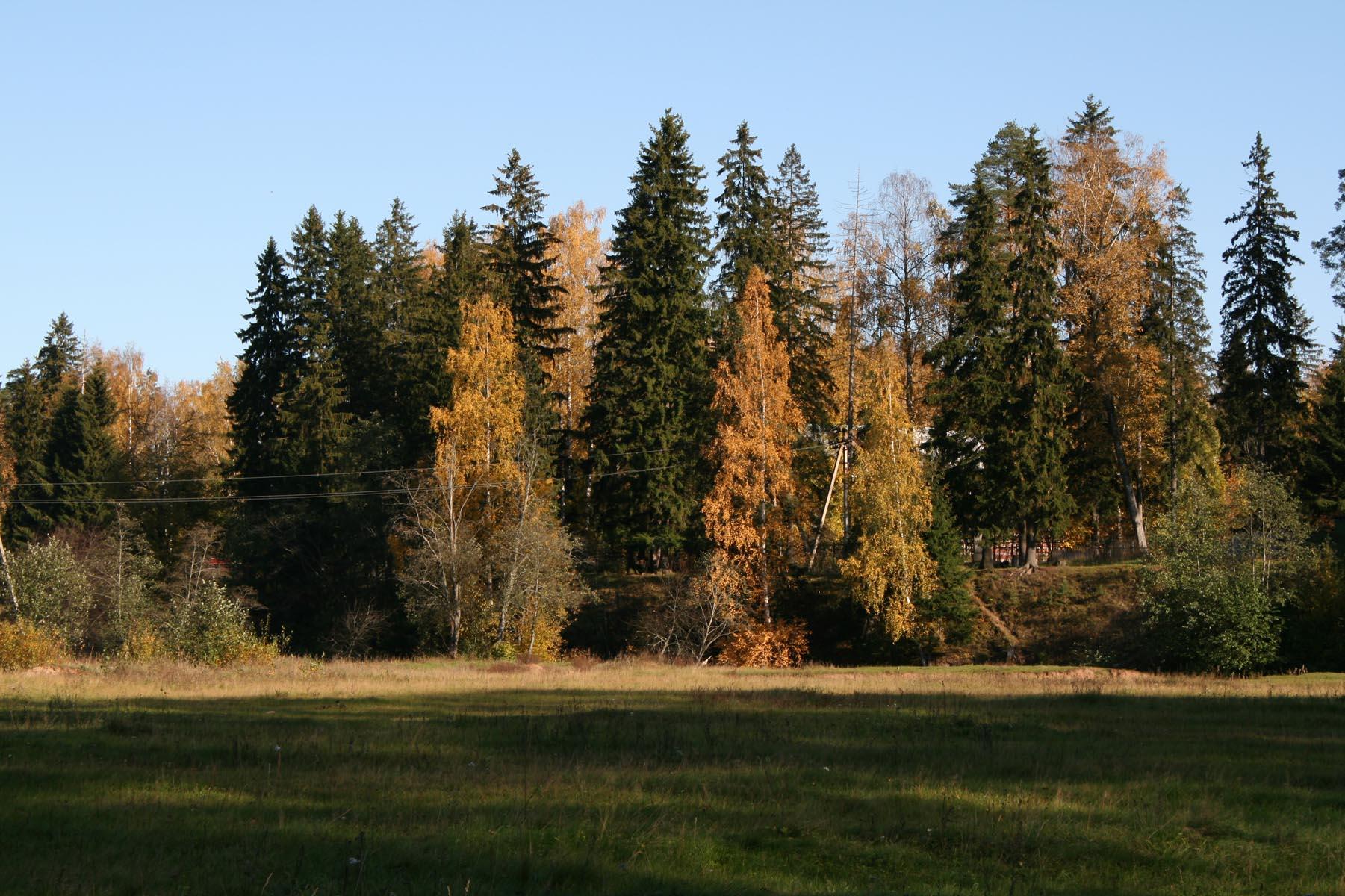 Лес над берегом