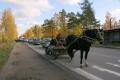 Лошадь в пробке