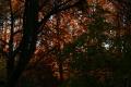 Закат сквозь осень